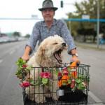 Человек едет на велосипеде со своей собакой Django в корзине через Берлин, Германия, 3 сентября 2013