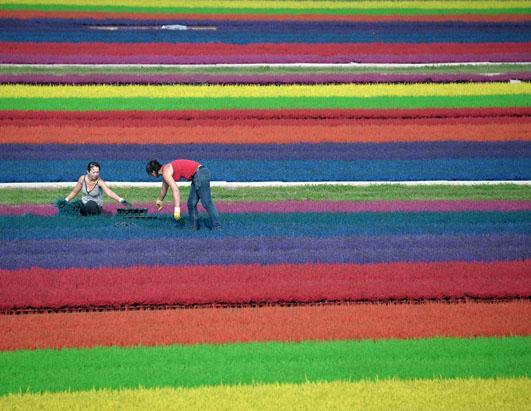 Садовники работают в окрашенных полях.