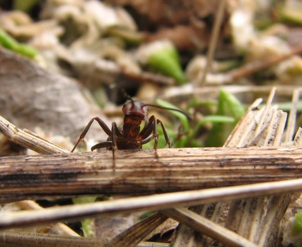 муравьи работают по TCP/IP